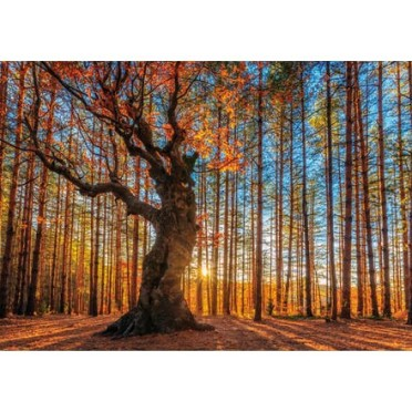 Wentworth - Maxi Puzzle Bois - 250 Pièces - The King of the Forest