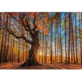 Wentworth - Maxi Puzzle Bois - 250 Pièces - The King of the Forest 0